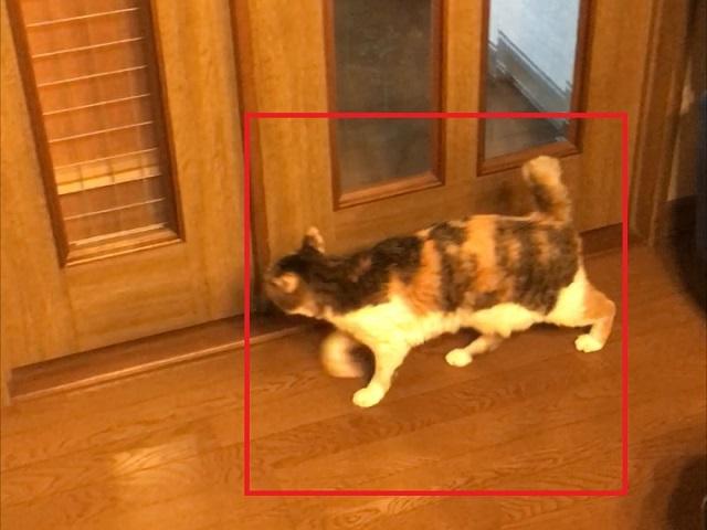 ディープラーニングによる猫検出